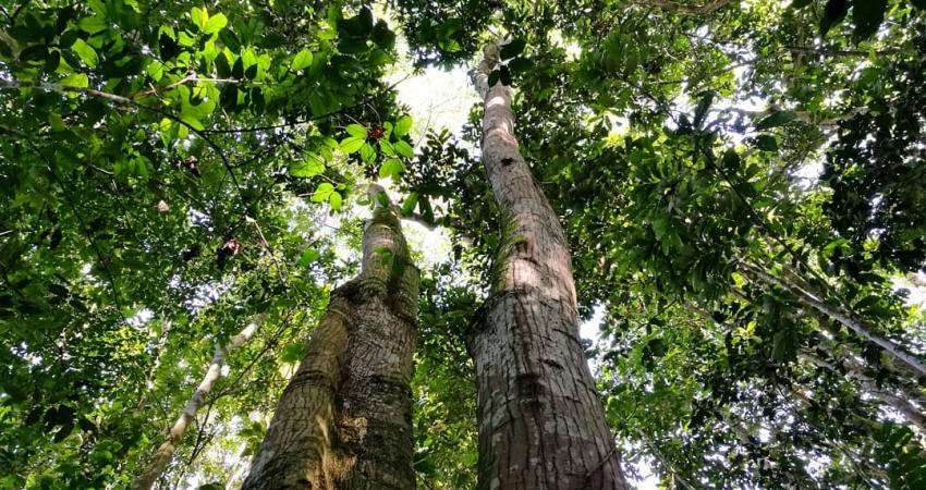 La deforestación en bosques tropicales se ha duplicado desde 2008, según Global Forest Watch.